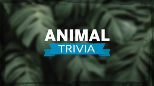 العاب مسابقة الحيوانات